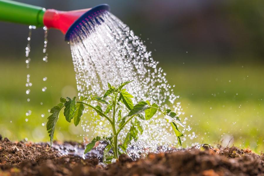 Watering-the-garden